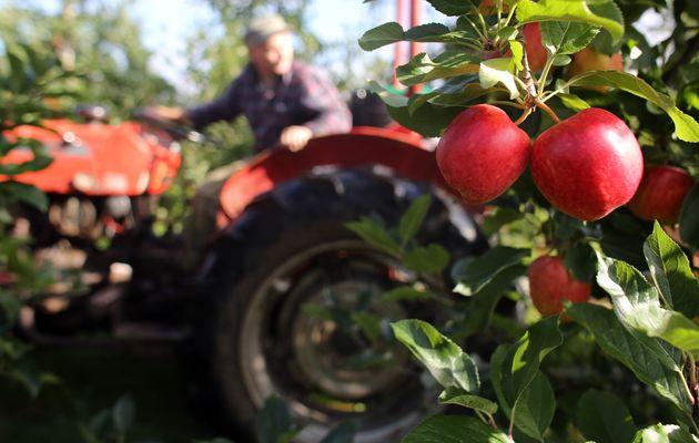 Αγρότες στη Βρετανία αφήνουν χιλιάδες τόνους φρούτων και λαχανικών να σαπίζουν στα