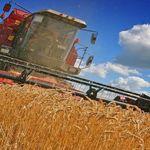 Agriculture: pas d'importation de blé dur et d'orge pour