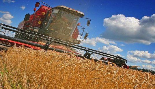Pas d'importation de blé dur et d'orge pour