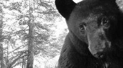 LOOK: Bear Selfie And Other Photos Alberta Animals Took