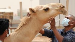 5 More Deaths From MERS In Saudi