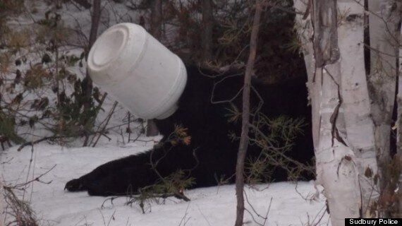 Real-Life 'Winnie The Pooh' Rescued In Sudbury