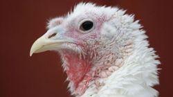 Maple Leaf Foods 'Disturbed' By Turkey