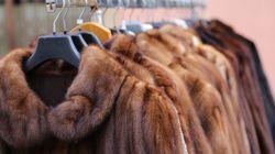 「動物への残虐な行為に加担しない」カリフォルニア州が毛皮製品の販売禁止へ。アメリカの州で初