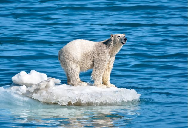 CHUKOTKA AUTONOMOUS AREA, RUSSIA - JULY 12, 2019: A polar bear by Wrangel Island. Yuri Smityuk/TASS (Photo...