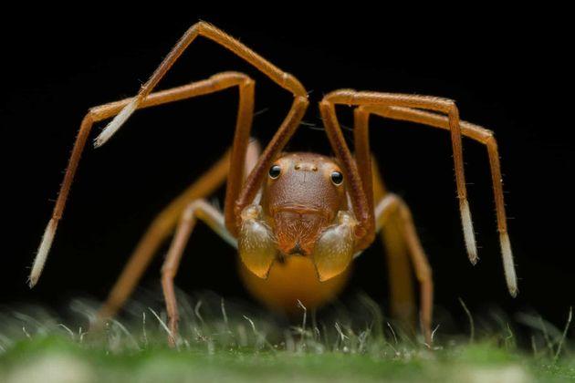 이것은 보통의 개미가 아니다. 베짜기개미의 턱 옆에 붙은 더듬이는 다리와 비슷하다.동물 초상 부문