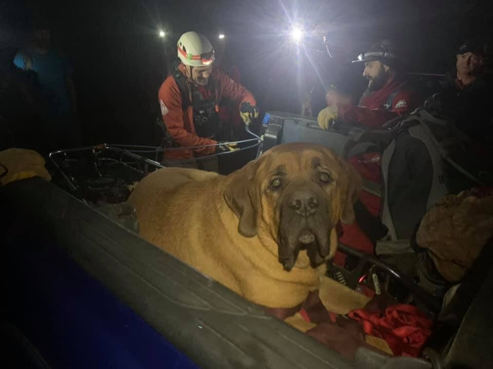 Members of the Salt Lake County Sheriff's Search and Rescue squad in Utah proved friends in need for Floyd when a mountain hike left the huge dog exhausted.