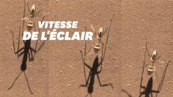 Cette fourmi est la plus rapide du monde grâce à une technique