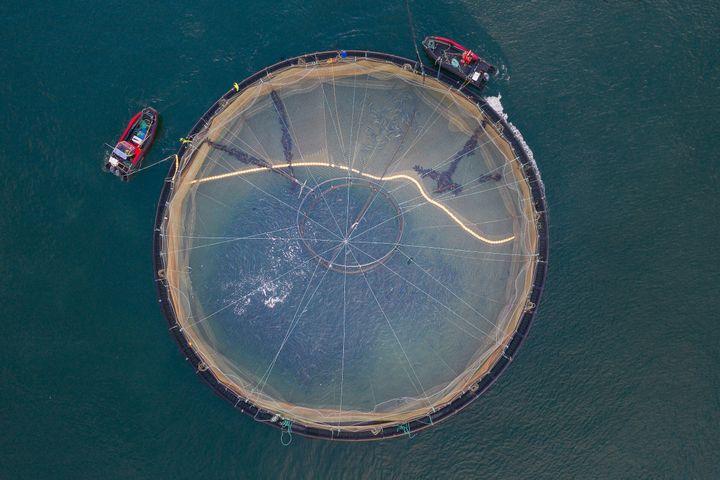 Un allevamento di salmone scozzese