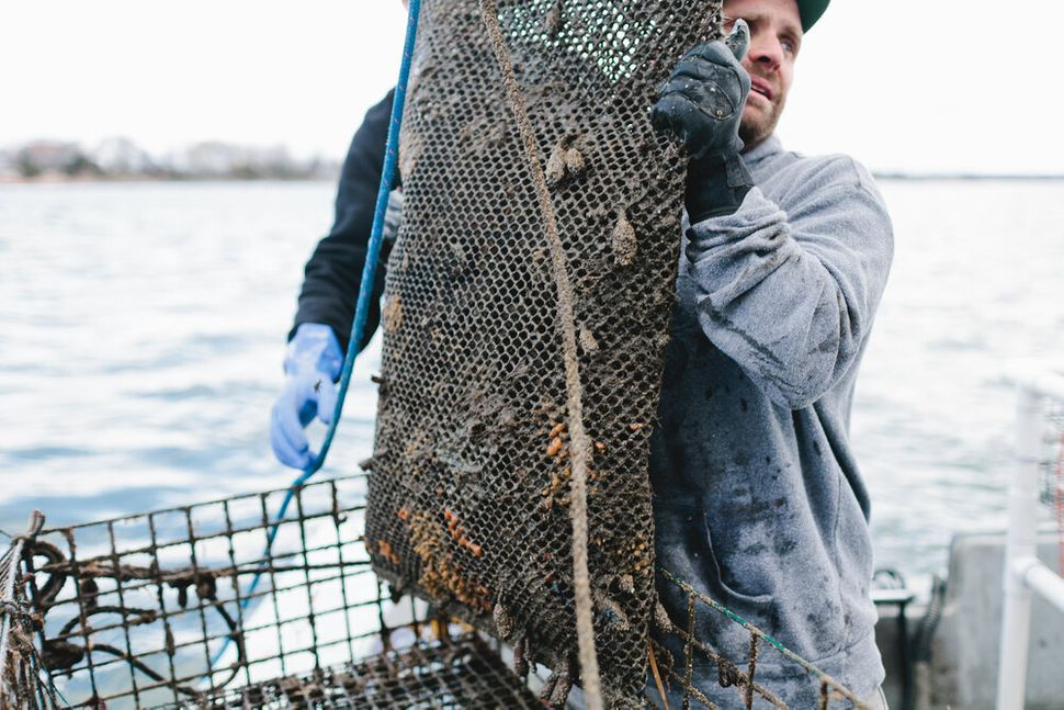 Smith harvests oysters from his Thimble Island Ocean Farm off Branford, Connecticut.