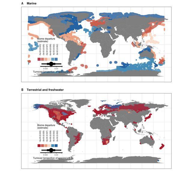 Le remplacement des espèces au sein des écosystèmes est plus important dans les