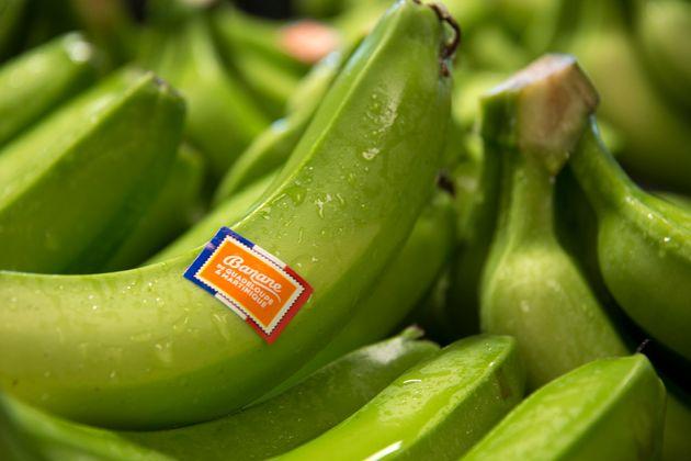 Le chlordécone, utilisé insecticide dans les bananeraies pendant 20 ans aux Antilles, est...