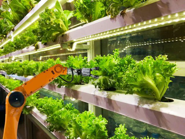 Non c'è cibo sostenibile senza le