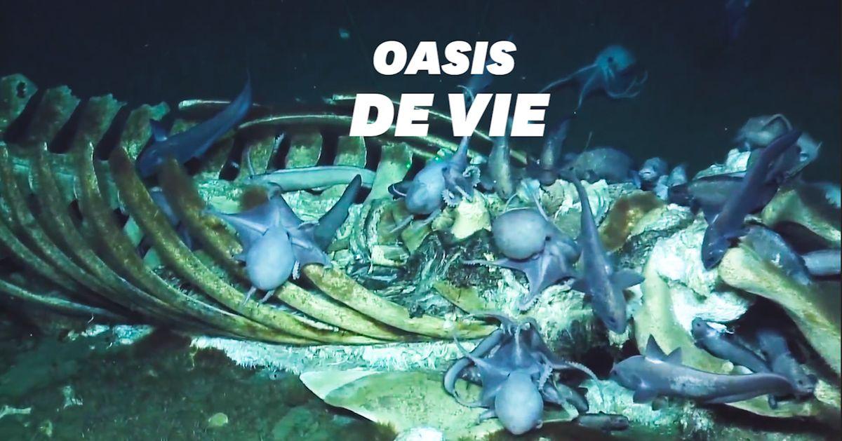 L'incroyable découverte d'une carcasse de baleine qui abrite des centaines d'espèces sous-marines