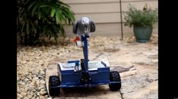 WATCH: BirdBuggy Puts Parrot In The Driver's Seat, Er,
