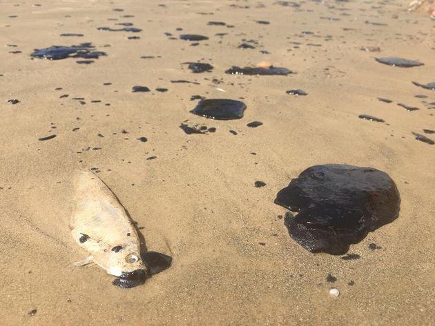 Derramamento de óleo no litoral nordestino já impacta no turismo. Em Fortaleza (CE), a...