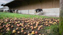 Après Lubrizol, les agriculteurs peuvent à nouveau commercialiser tous leurs