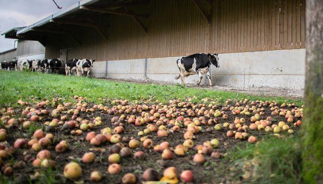 Les agriculteurs touchés par l'incendie de Lubrizol peuvent à nouveau commercialiser tous leurs produits...