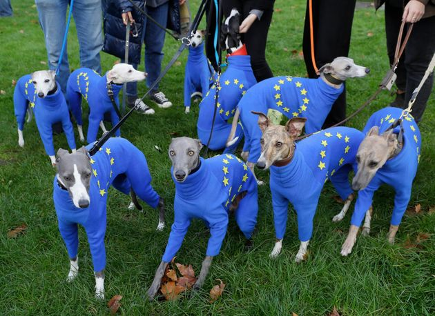 Whippets wear clothing with the EU flag during anti-Brexit protests in London, Saturday, Oct. 19, 2019....