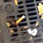 Κατσαρίδες θεριακλήδες, αρουραίοι με πίτσα και άλλα αλλόκοτα στους δρόμους της Νέας