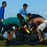 Sim, você pode ajudar a retirar o óleo que devasta o litoral do