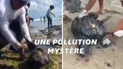 Cette plage paradisiaque brésilienne a été polluée par une marée