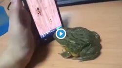 Προσοχή: Ο βάτραχος