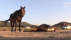 Το άλογο- ηθοποιός: Το παίζει νεκρό όταν πάει κάποιος να το
