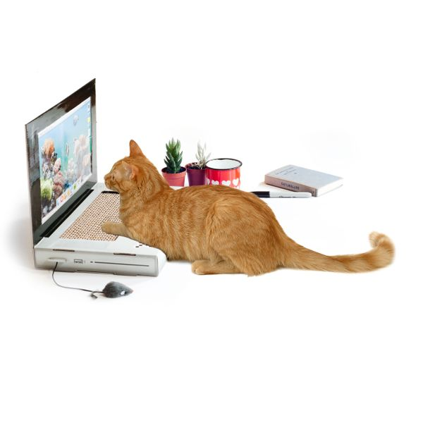 Does your cat spend too much time on your computer? Sucks, doesn't it? But you can reclaim your computer by giving kitty&nbsp