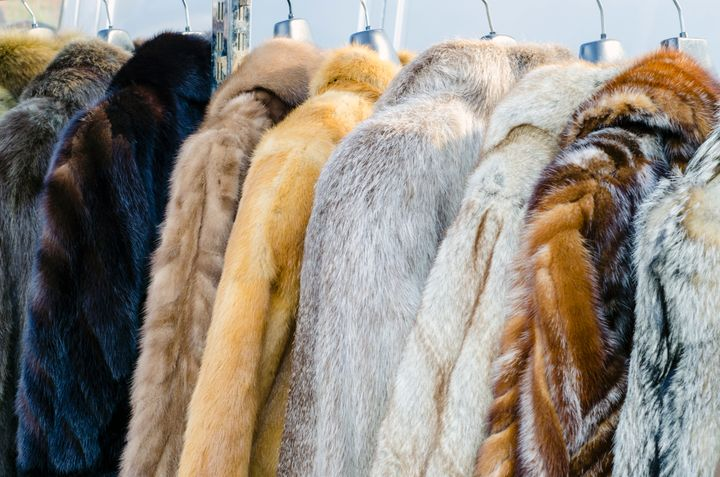 More than 100 million animals are killed worldwide each year for their fur, according to the Humane Society of the United Sta