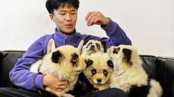 Κίνα: Καφετέρια «μεταμόρφωσε» σκυλιά σε πάντα και προκάλεσε