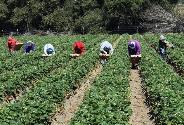 Des travailleurs agricoles guatémaltèques exploités au Québec obtiennent des