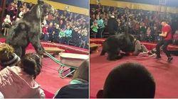 Βίντεο: Η απάνθρωπη αντιμετώπιση αρκούδας που επιτέθηκε στον εκπαιδευτή