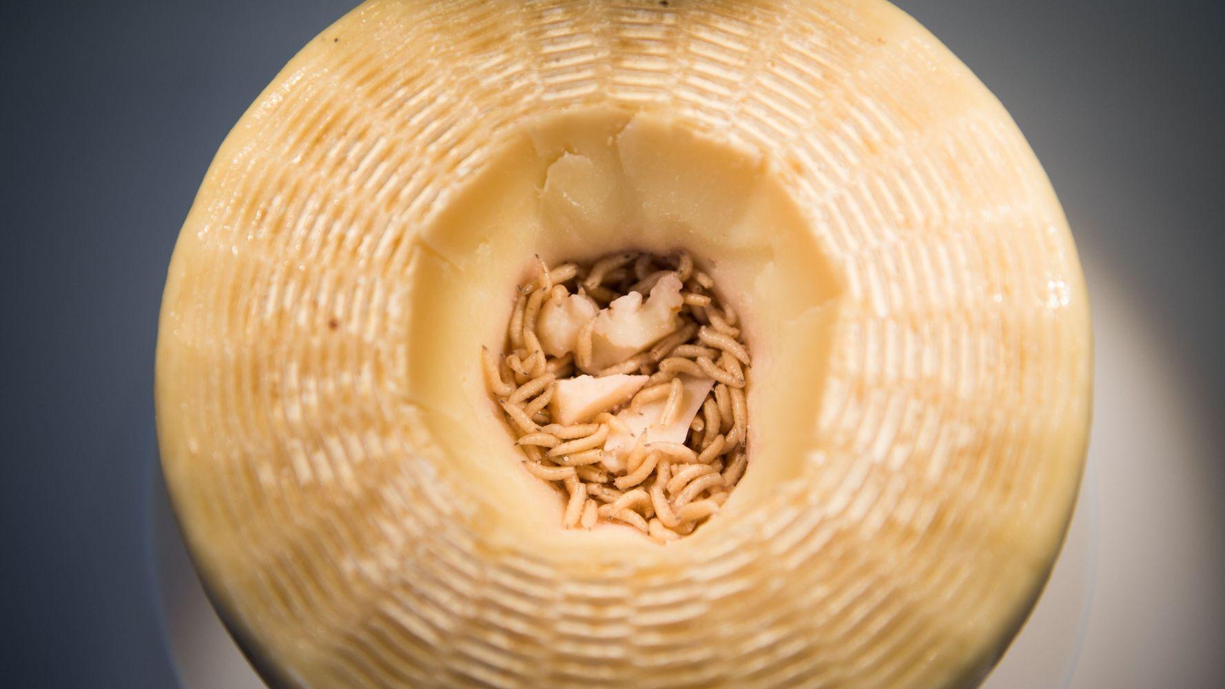 Le fromage avec des vers vivants, certains en raffolent