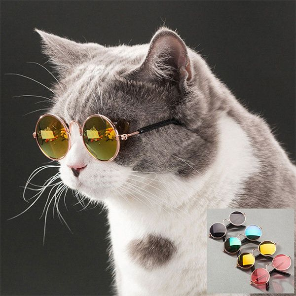 "Sure, you probably think your cat is cool, but <a href=""https://www.theapollobox.com/product/sku700100/pet-sunglasses"" target"
