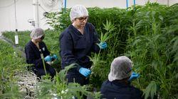 L'Assemblée autorise le test du cannabis thérapeutique en