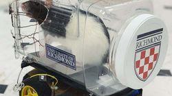 과학자들이 쥐가 차를 운전해 먹이를 찾도록 훈련하는 데