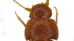 Ce nouvel insecte s'appelle Greta, comme Greta