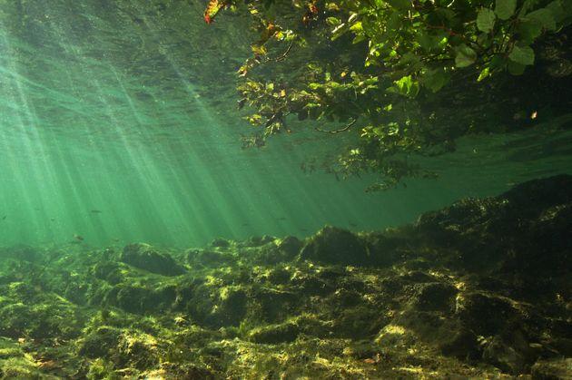 Le paludi di Hollywood tra alghe e