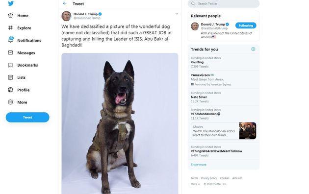 Donald Trump a dévoilé ce 28 octobre la photo du chien ayant joué un rôle dans l'assaut contre Abou Bakr...