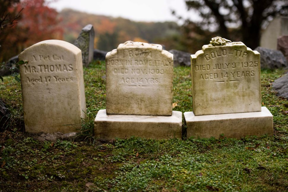 Running a pet cemetery is a unique kind of family business.