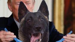 도널드 트럼프가 개에게 메달을 걸어주는 합성 사진을