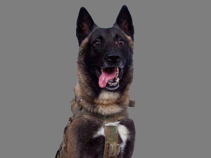 """Blessé lors de la mission, le chien apparemment nommé """"Conan"""" serait toujours sur place en compagnie de son maître et du reste de l'unité."""