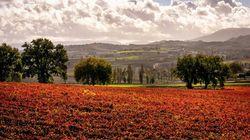 Umbria d'autunno: luoghi del silenzio, foliage e e soste slow