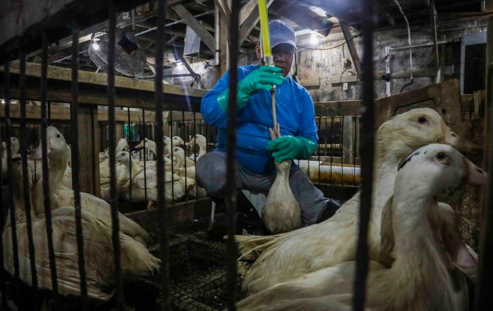 In this July 18, 2019, file photo, Moulard ducks, a hybrid white farm Peking duck and a South American Muscovy duck, are cage