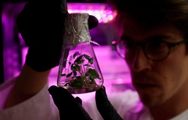 Τσέχοι επιστήμονες καλλιεργούν τα πρώτα φυτά για τον