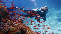 Las especies marina cambian más rápido que las