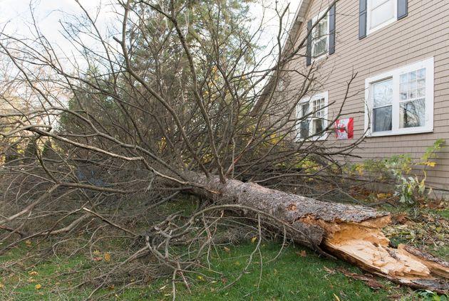 Un arbre cassé à Hudson, à l'ouest de Montréal. (Graham
