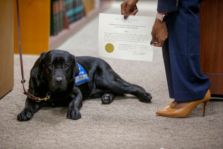 Hatty is the office's first emotional support dog/