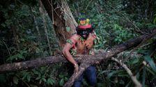 Penebang Liar Membunuh Amazon Adat Prajurit Yang Menjaga Hutan
